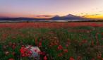 Mount-Ararat-with-flowers