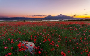 Mount-Ararat-with-flowers