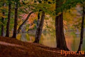 Природа Дилиджана